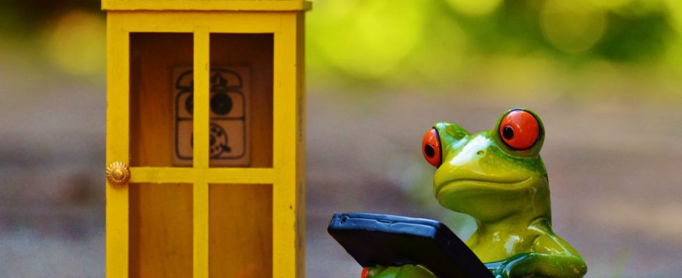 frog-949599_1920