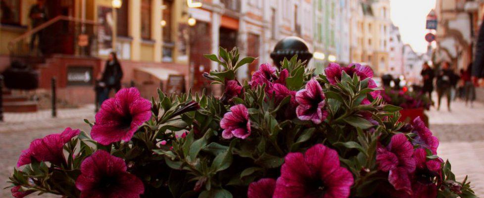 flower-3320125_1920